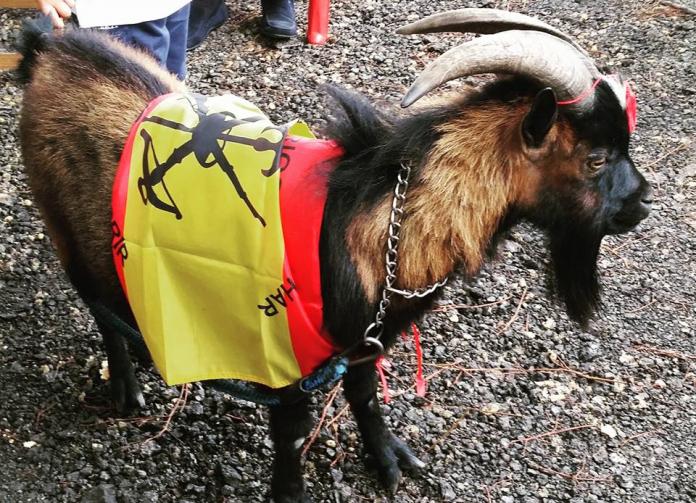 La cabra legionària també s'ha manifestat
